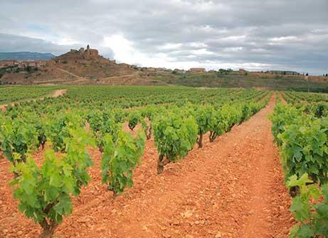 Clube do Vinho Vinícola 6